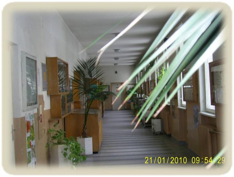 Биологически корпус