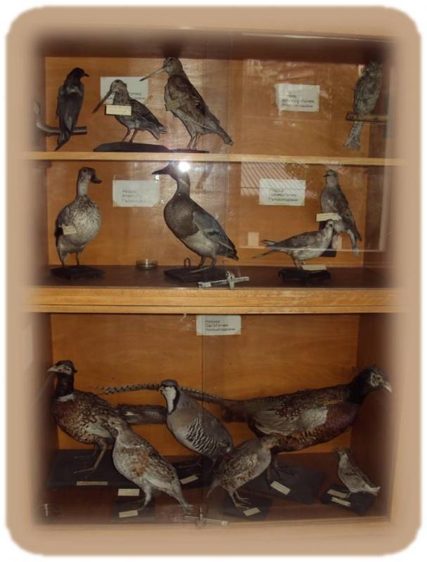 Птици 1
