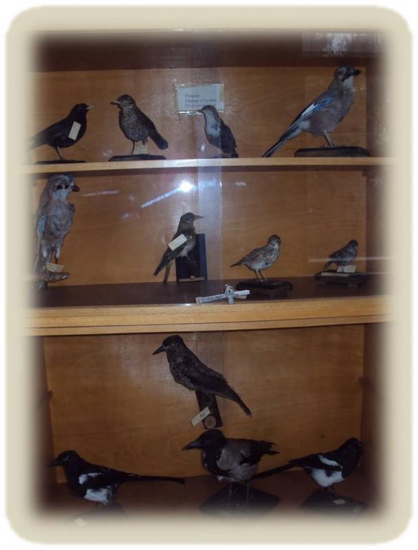 Птици 2